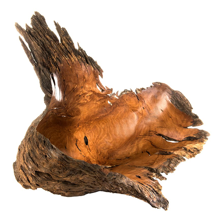 Wild Burl Sculpture | Raw Nature Australia